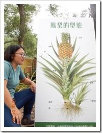1070428介紹鳳梨植物的構造