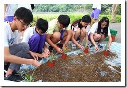 1070428銘泉農場同學栽植鳳梨作物