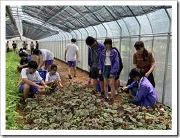 學生蔬菜收割