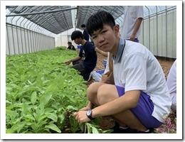 學員收割網室蔬菜