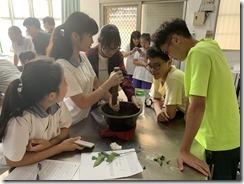 仙草擂茶DIY製作過程2