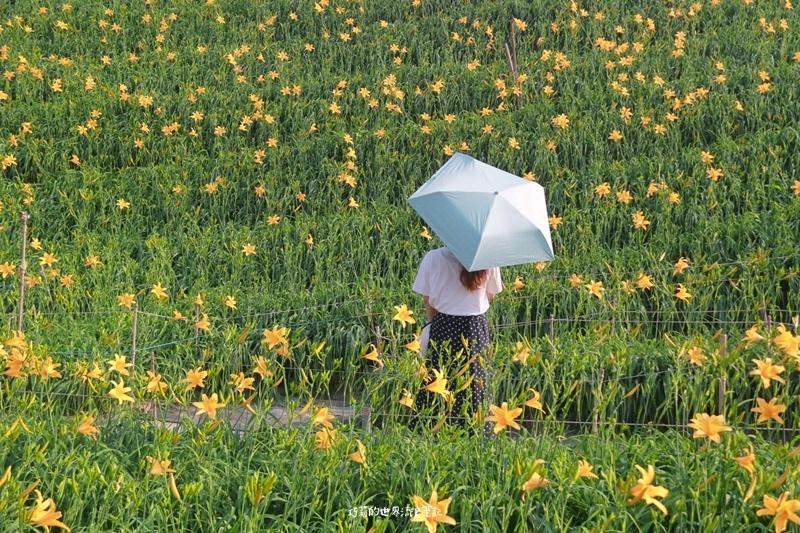 輕量傘-大振豐洋傘