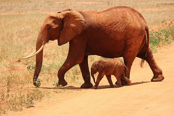 elephant-175798_1280.jpg