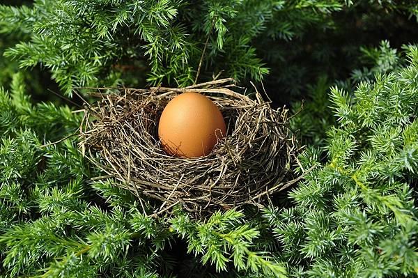 egg-1600890_1280.jpg