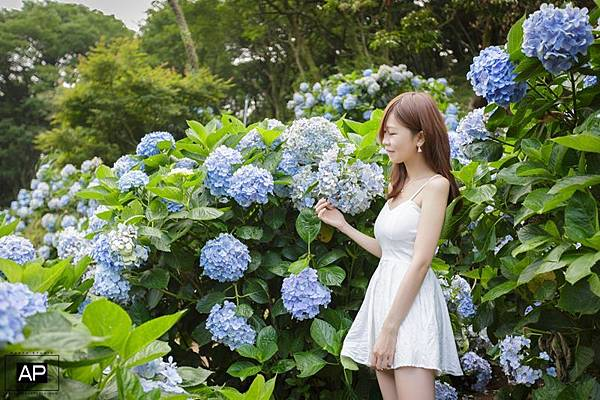 欸比-陽明山高家繡球花+黑森林 (5).jpg