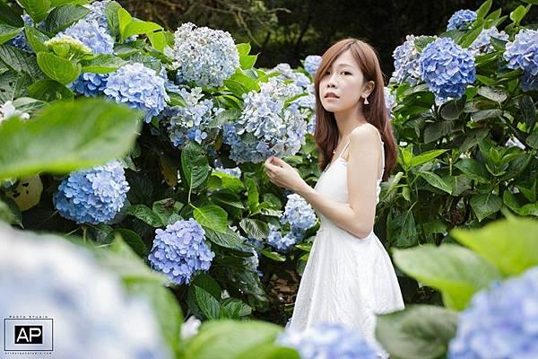 欸比-陽明山高家繡球花+黑森林 (8).jpg