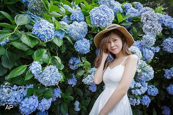 欸比-陽明山高家繡球花+黑森林 (10).jpg