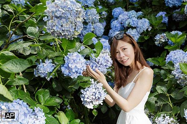欸比-陽明山高家繡球花+黑森林 (19).jpg