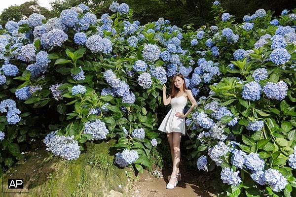 欸比-陽明山高家繡球花+黑森林 (18).jpg