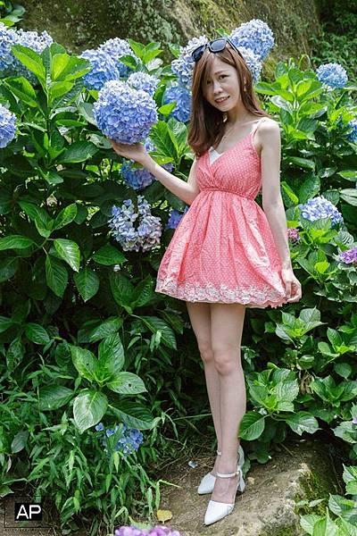 欸比-陽明山高家繡球花+黑森林 (38).jpg