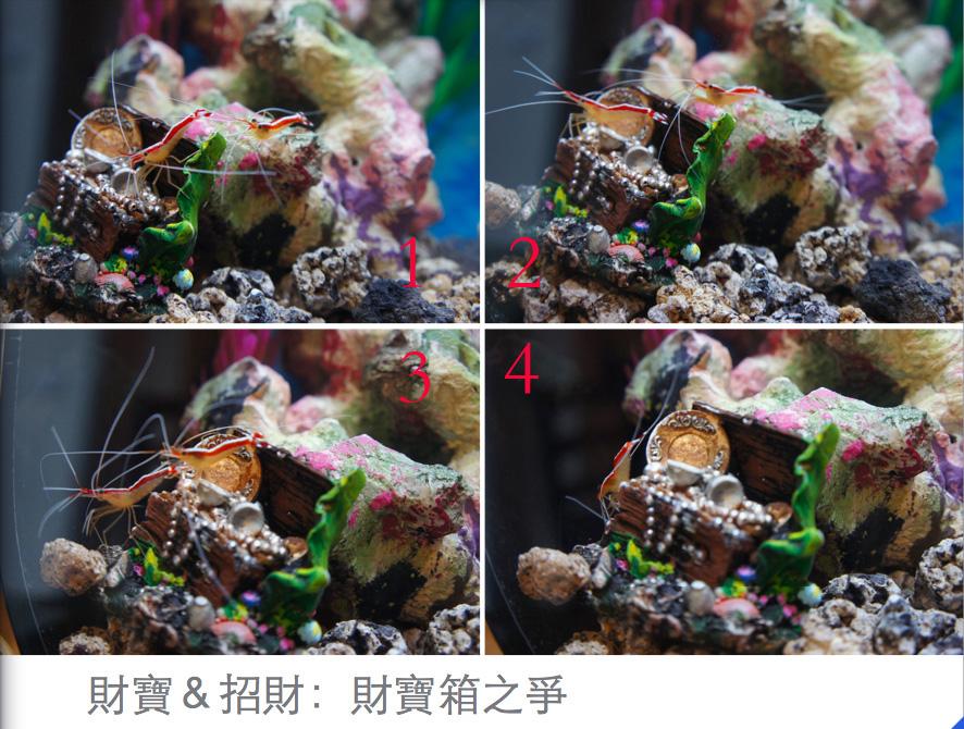 shrimpflight.jpg