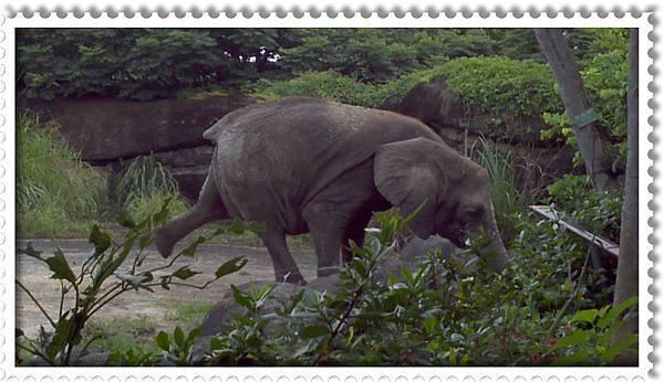 翹腳的大象
