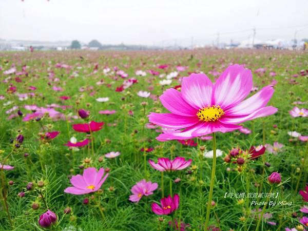 2012新社花毯節03