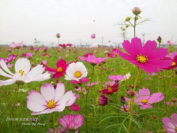 2012新社花毯節04
