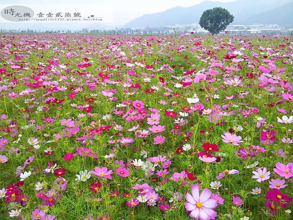 2012新社花毯節06