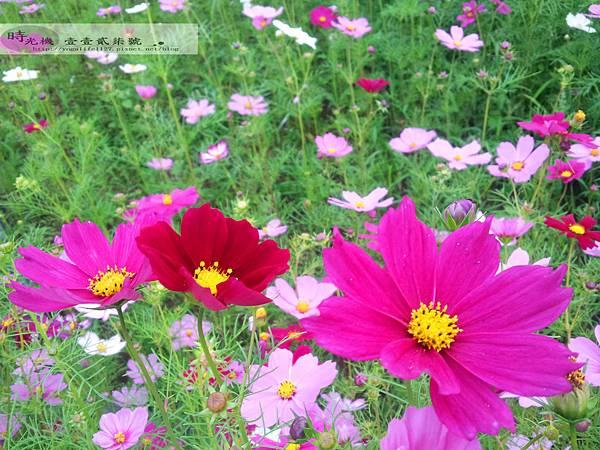 2012新社花毯節09