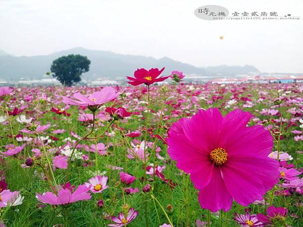 2012新社花毯節10