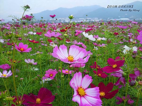 2012新社花毯節12