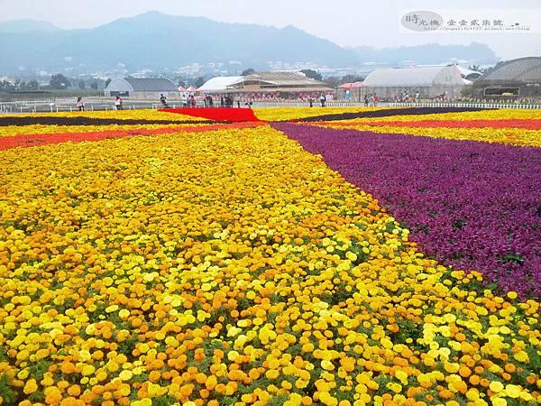 2012新社花毯節15