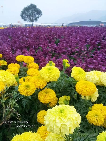 2012新社花毯節16