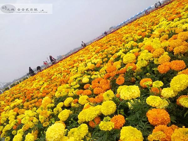 2012新社花毯節18