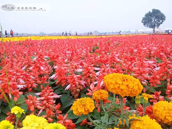 2012新社花毯節19