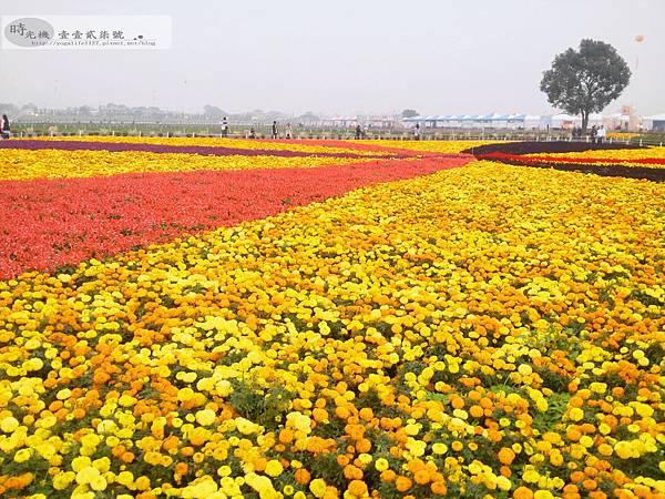 2012新社花毯節20