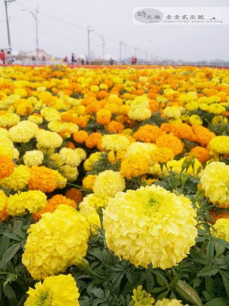 2012新社花毯節21