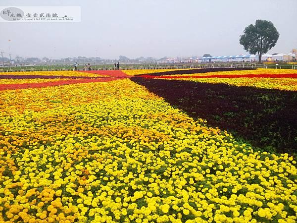 2012新社花毯節22