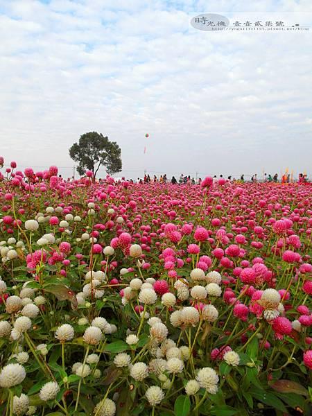 2012新社花毯節30
