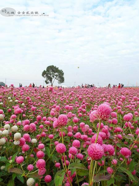 2012新社花毯節31
