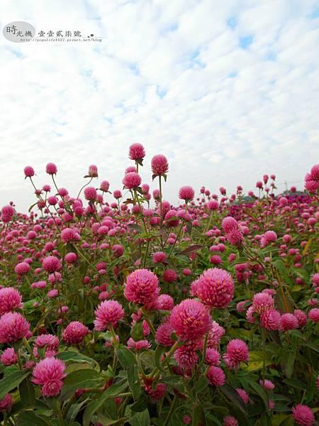 2012新社花毯節33