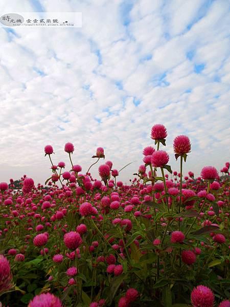 2012新社花毯節34
