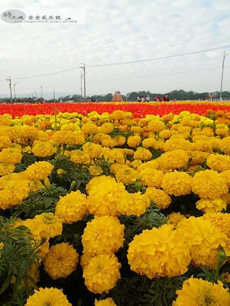 2012新社花毯節36