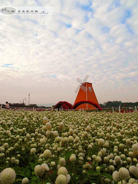 2012新社花毯節39