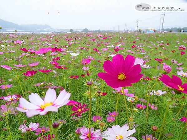 2012新社花毯節46