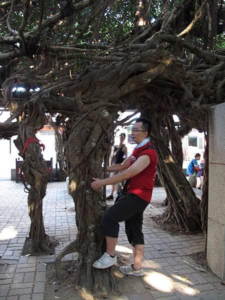 048. 抱樹的哈雷.JPG