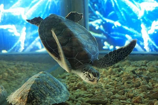 039. 自由自在的海龜.JPG