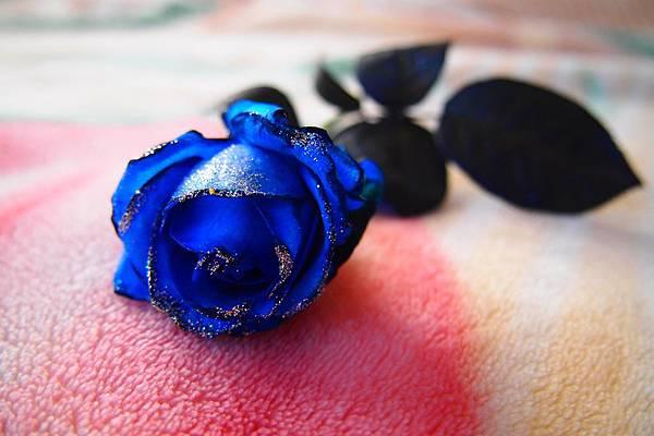 04. 鮮艷模式的藍玫瑰.JPG