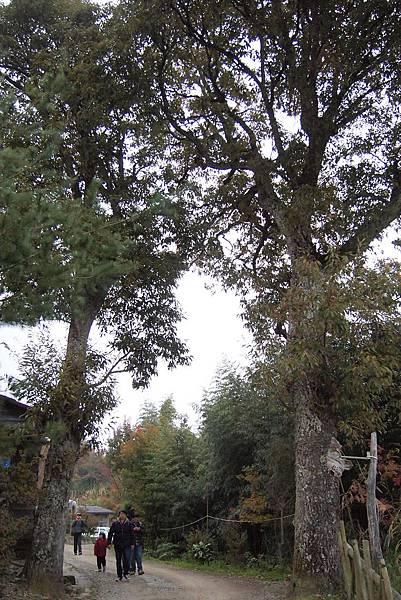 062. 夫妻樹.JPG