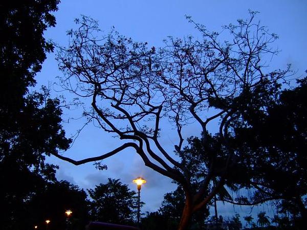 14. 夜晚的樹.JPG