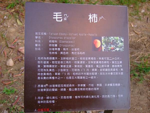 09. 毛柿.JPG