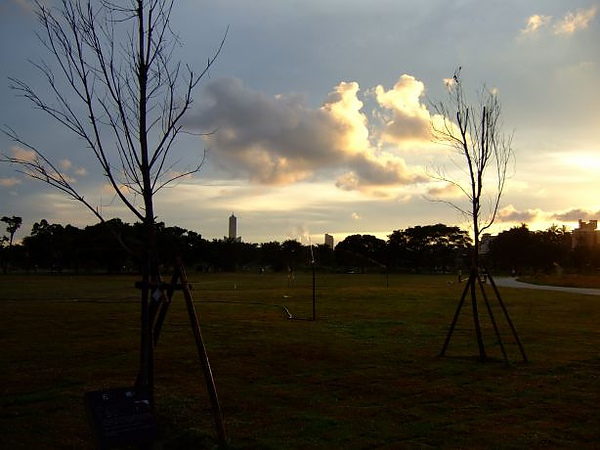 03. 未發芽的樹.JPG