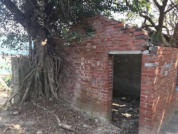 樹攀牆.jpg