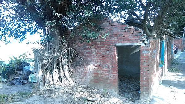 樹攀牆2.jpg