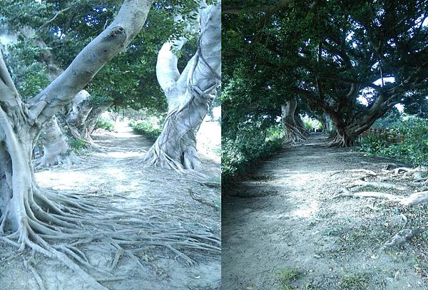 榕樹區雙向拍攝.png