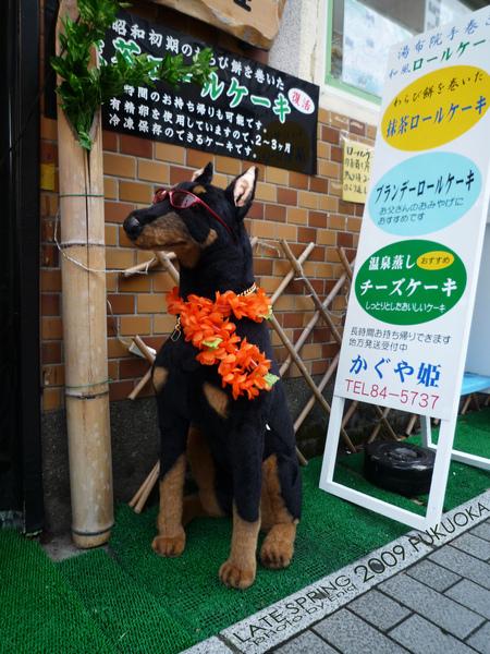其實是夏威夷狗...