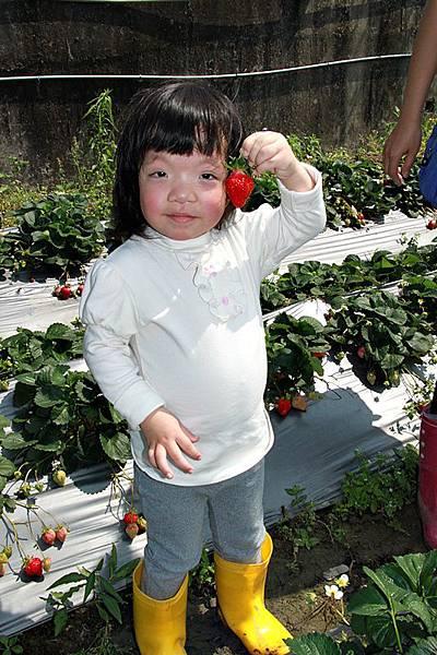 這是我剪的草莓喔