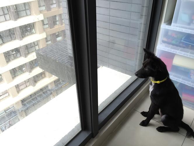 看窗外.JPG