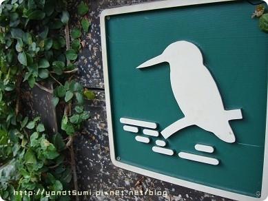 今天看了好多鳥,不過我都不知道他們是啥